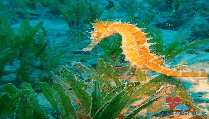 Морской конек у дна моря